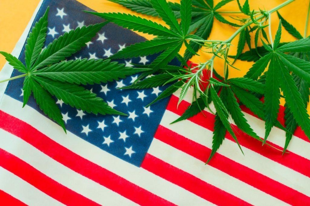 cannabis-american